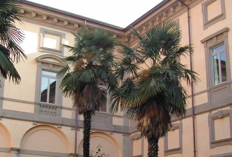 Alcune palme racchiuse da una siepe di bosso presenti nell'antica Corte nobile di Villa Crivelli Pusterla (Fototeca ISAL, Fotografia di Anna Zaffaroni)