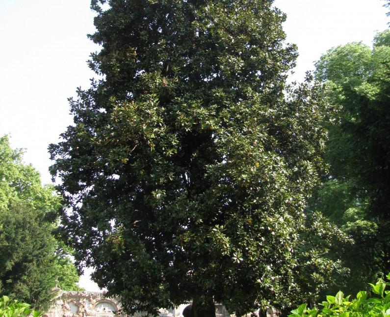 40 magnolia 2(1)