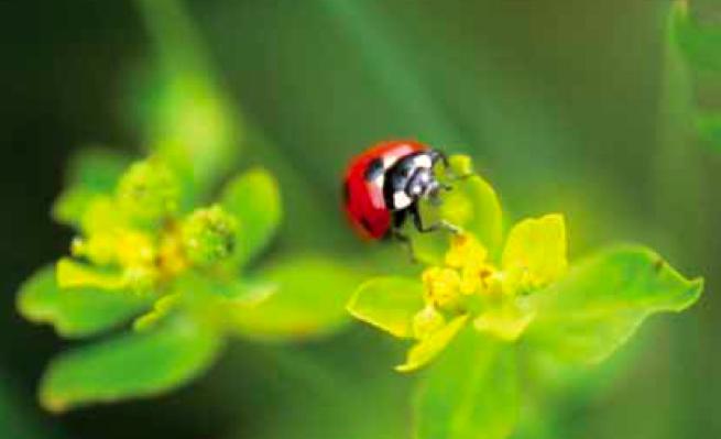 23SE Biodiversità (2)coccinella