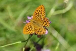 22SE Prato delle farfalle (5) Pafia